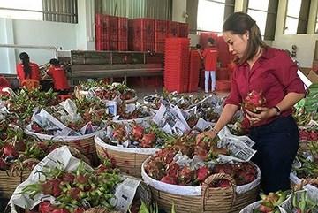 China still key market for Vietnamese farm produce