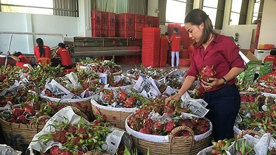 China still key market for Vietnamese farm produce