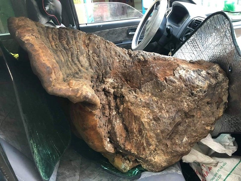 Cây nấm 'khủng' hạng nhất Việt Nam: Nặng 70kg, 60 triệu chưa bán Nam-cho-nang-gan-70kg-1