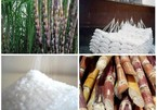 Sugar industry: some die, others thrive