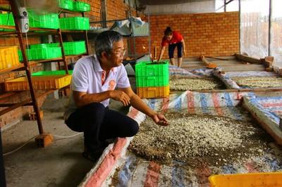Đồng Tháp lạ nhất Việt Nam: Bán trứng ruồi 15 triệu/kg