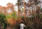 Hectares of pines poisoned in Lam Dong farmland grab