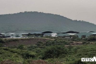 Rà soát dự án nuôi bò nghìn tỷ liên quan đến cha con ông Trần Bắc Hà