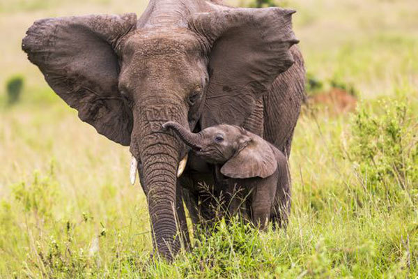 1 million species at risk of extinction: UN report