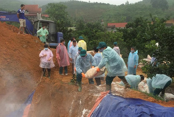 More than 200 infected pigs culled