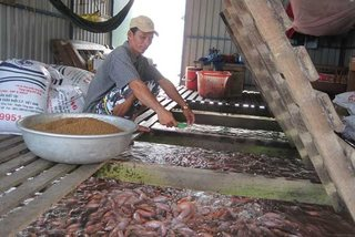 EU refuses 17 batches of Vietnamese seafood, almond kernels