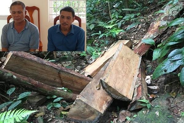 Bắt tạm giam 2 đối tượng phá rừng gỗ quý ở Quảng Bình