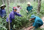 Vietnam finalises agreement to trade legal timber with EU