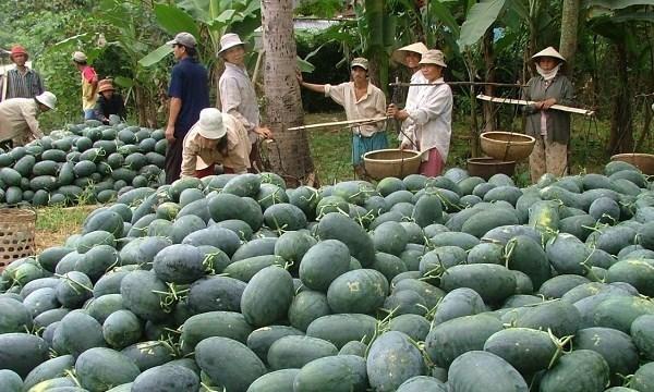 thị trường trung quốc,xuất khẩu nông sản,hoa quả xuất khẩu,xuất khẩu rau quả,rau quả