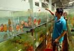 Vietnam has great potential for export of ornamental creatures