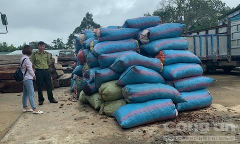 Thương lái Trung Quốc mua vỏ thông số lượng lớn ở Gia Lai