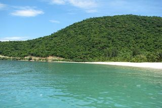 Cham Island faces visitor overloading