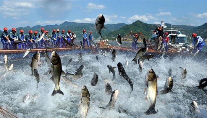 ASEAN emerges as one of biggest importers of Vietnamese tra fish