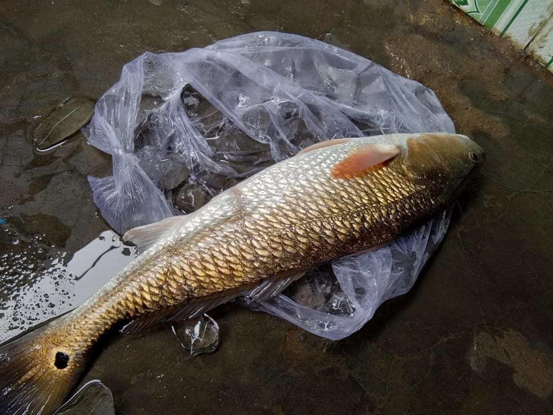 cá sủ vàng,Xuất Khẩu Nông Sản,Nông Sản Việt,Bàn Ghế Tiền Tỷ,cua biển