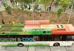Thú vị xe buýt có thảm cỏ xanh mướt trồng trên nóc