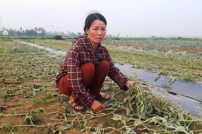 Năm sào dưa hấu chặt lìa gốc qua 1 đêm: Chị nông dân nghèo khóc nấc