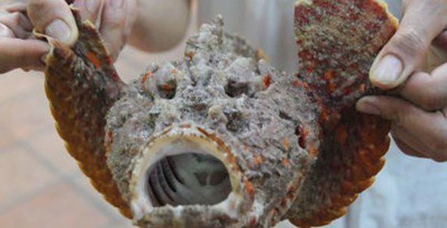 đặc sản biển,đặc sản Phú Yên,cá mặt quỷ,đặc sản kinh dị