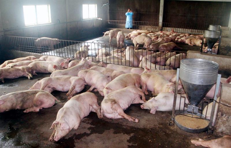 Việt Nam đối diện dịch bệnh nguy hiểm, lịch sử chưa từng có