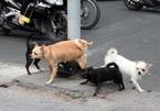 Trách nhiệm bồi thường của chủ khi chó cắn người