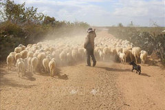 Ninh Thuan livestock farmers struggle to feed animals due to drought