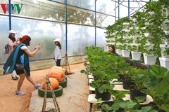 Farm tours prove to be a hit among visitors to Da Lat