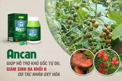 Các thảo dược tốt cho bệnh nhân u bướu