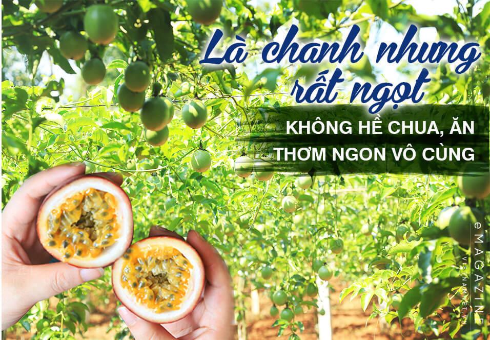 chanh leo,nông nghiệp sạch,nông nghiệp hữu cơ,nông nghiệp,Quảng Trị