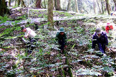 'Giấu báu vật' trong rừng sâu, vùng đất nghèo giờ có nhiều tỷ phú