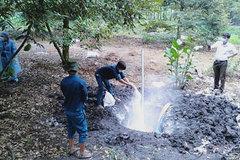 Vietnam to strengthen measures against African swine fever