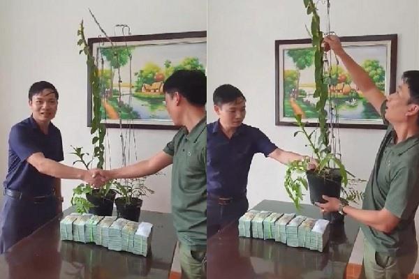 Tiết lộ của đại gia Hà Tĩnh ra Hải Phòng mua 2 chậu lan 3,5 tỷ