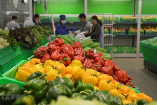 Vietnam's fruit, vegetable exports bounce back in April