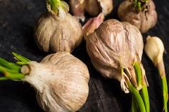 Chuyên gia lý giải thực hư việc dinh dưỡng tăng gấp đôi khi ăn tỏi mọc mầm