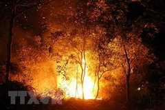 Forest fire put out in Dien Bien