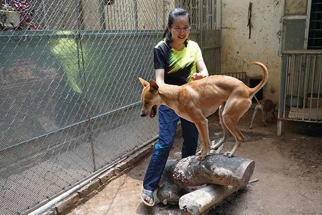 nuôi chó,chó cảnh,chó Phú Quốc