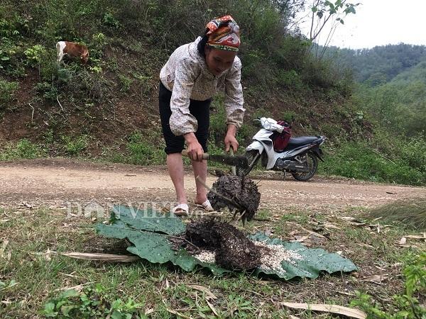 đặc sản Việt Nam,trứng kiến