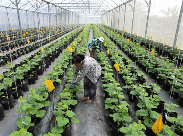 Agricultural sector looks to scale down workforce
