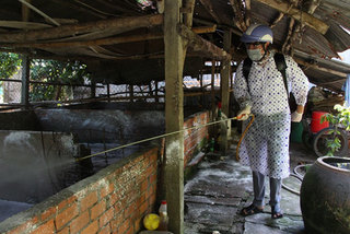 HCM City strengthens preventive measures against African swine fever