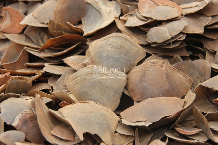 Over eight tonnes of pangolin scales seized at Hai Phong port