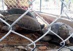 Rare turtles found at Quang Nam coffee shop