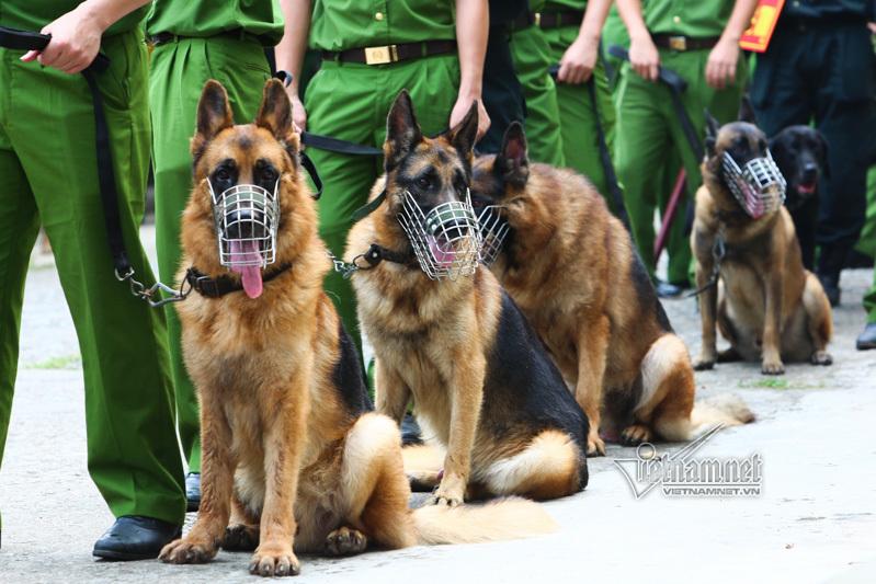 Gần 300 chó nghiệp vụ của Cảnh sát cơ động HN vượt tường 2m ngoạn mục