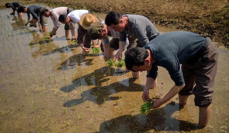 Cảnh dân Triều Tiên vật vã chống hạn trên đồng, xin viện trợ khẩn