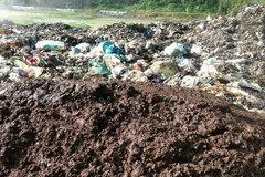 Cá chết kín suối, nghi do nước thải của công ty môi trường