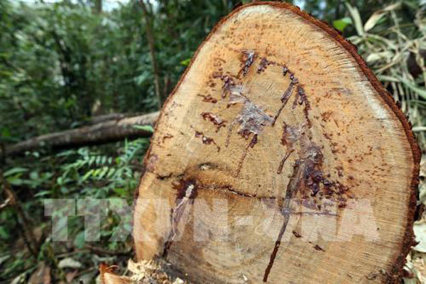 Poachers under investigation into national park's deforestation