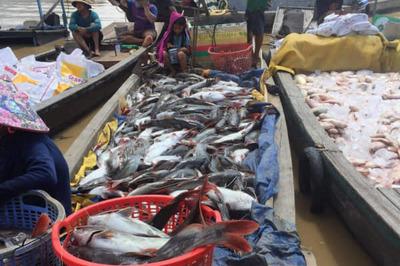Công an Đồng Nai điều tra vụ cá chết trắng sông La Ngà