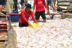 Cá chết trắng sông La Ngà, Bộ TN&MT truy tìm nguồn thải