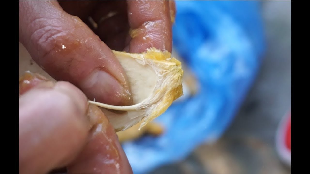 Dân Việt nhậu: Tôm hùm Trung Quốc nguy hại, bọ xít hôi khủng khiếp