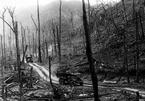 Ho Chí Minh Trail: 60 years and beyond