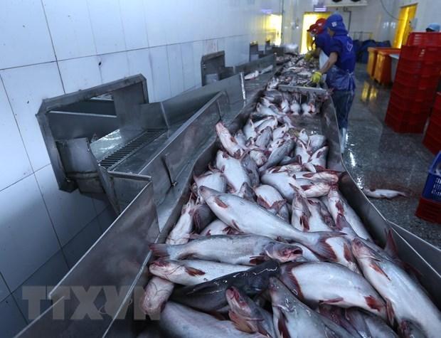 Tra fish shipments to US, China fall