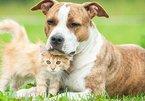 Những vấn đề cần suy nghĩ trước khi nuôi thú cưng trong nhà