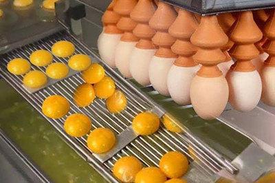 Máy đập tách hàng trăm quả trứng cùng lúc như thế nào?